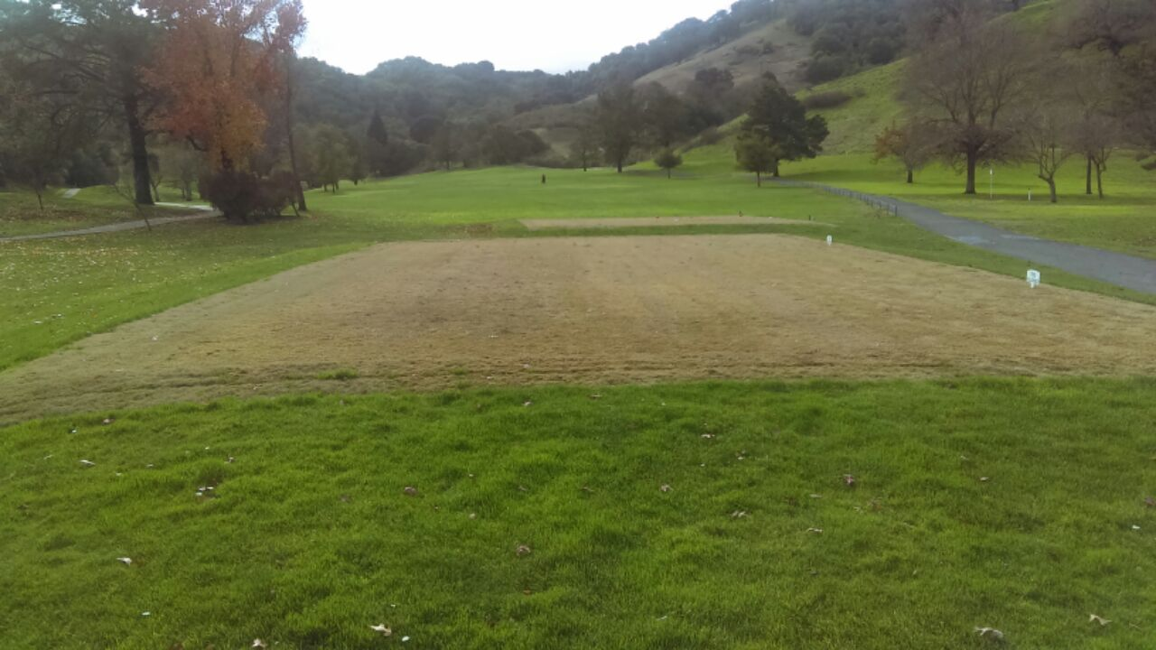 Some teeing grounds are brown due to being in a dormant state